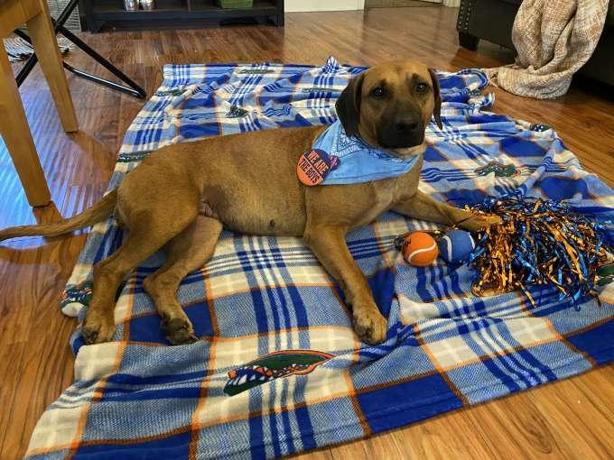 dog laying on blanket